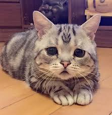 0222_cat_imgres