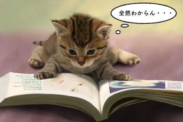 ネコが本を読んでいるイメージ